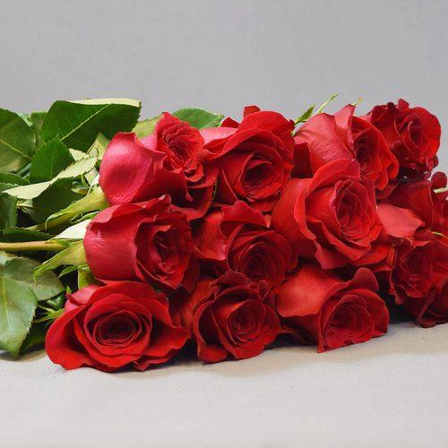 Cvjećarnica Fani_Prvoklasne crvene ruže