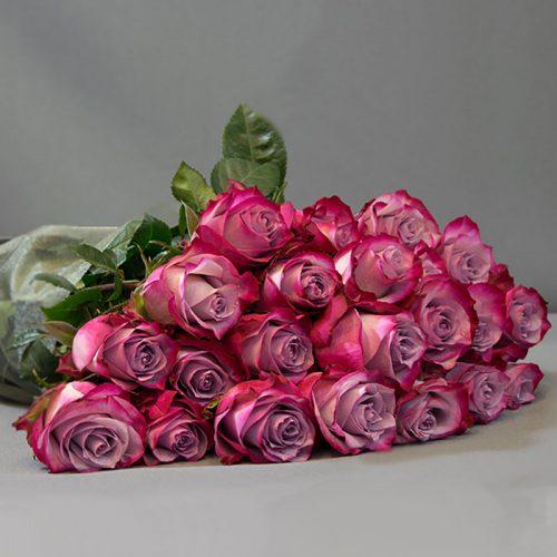 Cvjećarnica Fani_Prvoklasne ljubičaste ruže