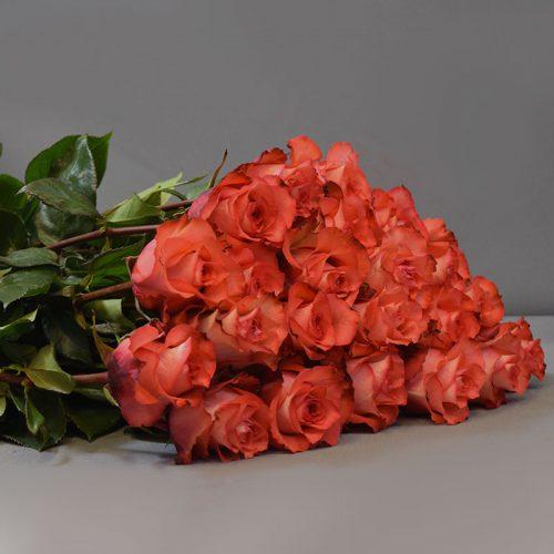 Cvjećarnica Fani_Prvoklasne narančaste ruže