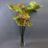 Cvjećarnica Fani_Rezano cvijeće_Anthuriumi