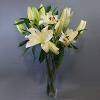 Cvjećarnica Fani_Rezano cvijeće_Orijentalni ljiljani_