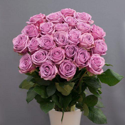 Cvjećarnica Fani_Rezano cvijeće_Ljubičaste ruže_zoom
