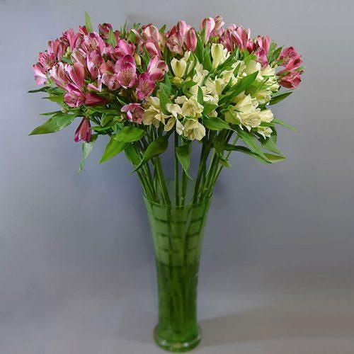 Cvjećarnica Fani_Rezano cvijeće_Alstromerije