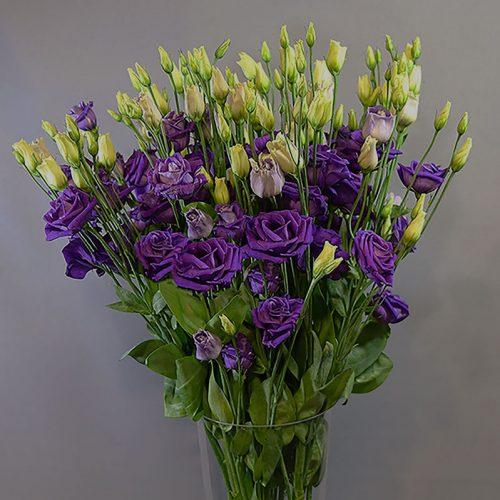 Cvjećarnica Fani_Rezano cvijeće_Lisianthusi ljubičasti