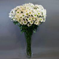 Cvjećarnica Fani_Rezano cvijeće_Margarete_